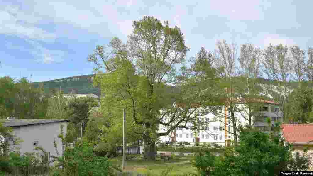 Платан Палласа, обхват дерева – 6,60 м, высота – около 25 м, возраст – более 200 лет. По преданию, в 1795 году академик Паллас посадил в центре села платан, который сохранился до наших дней, является достопримечательностью и изображен на гербе и флаге Терновки. Платан Палласа описан в книге КЭКЦ (Киевский эколого-культурный центр) «500 выдающихся деревьев Украины»