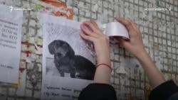 Сотни неравнодушных людей поддержали девочку у которой украли собаку