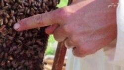 زنی که زنبور داری زندگی اش را عوض کرد