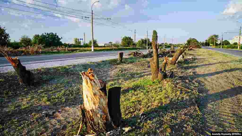 Сосны и акации под будущую дорогу уже спилены.