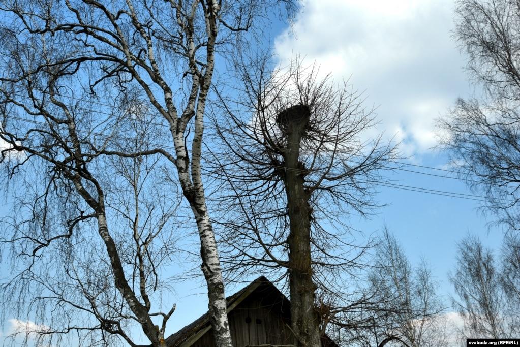 В Боброва в этом году не прилетели аисты.  Сельчане говорят, что птицы свелись