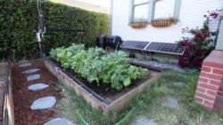 Робот-огородник: сам сажает, сам поливает, сам удобряет