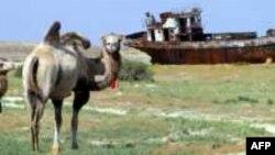 Арал теңізінің құрғап қалған табаны. Тамыз, 2005 ж.
