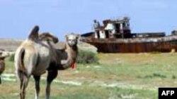 На одном из участков высохшего дна Аральского моря. Август 2005 года.