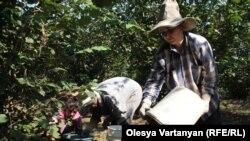 В ореховый сезон в нижней зоне Гальского района многолюдно