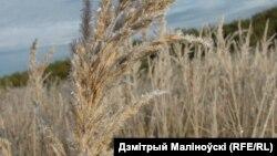 Фота Дьзмітрыя Маліноўскага