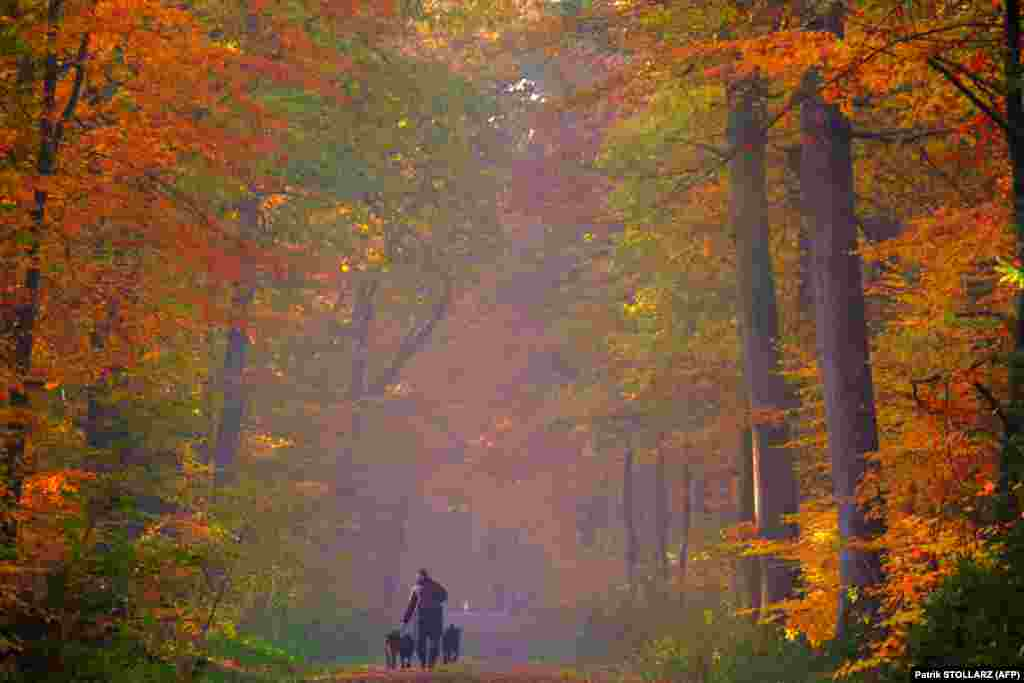 A man walks his dogs in an autumnal forest in Cuxhaven in northern Germany. (AFP/Patrik Stollarz)​
