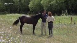Убежище для лошадей