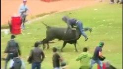 Быки ранили восемь человек на ежегодном фестивале в Перу