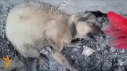 Viral Video Alleges Dog Cruelty In Azerbaijan