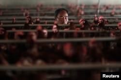 Производство яиц в Шанхае. Такой способ размещения несушек запрещен во многих странах мира