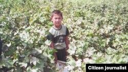 Uzbekistan - children are picking cotton in Koson district of Kashkadaryo region, 15Sep2011
