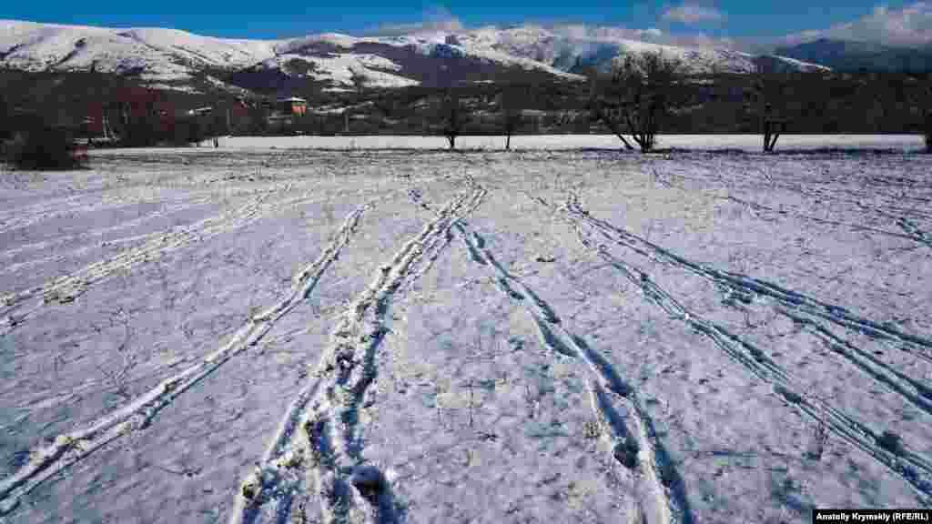 Сліди на снігу залишило коров'яче стадо з фермерського господарства «Едем»