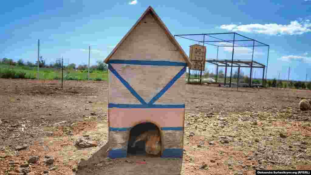 На территории поля стоят несколько домиков для животных