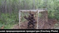 Медведь в клетке в Иркутской области