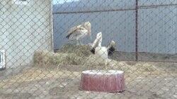В Кыргызстане ветеринар у себя дома организовала реабилитационный центр для животных