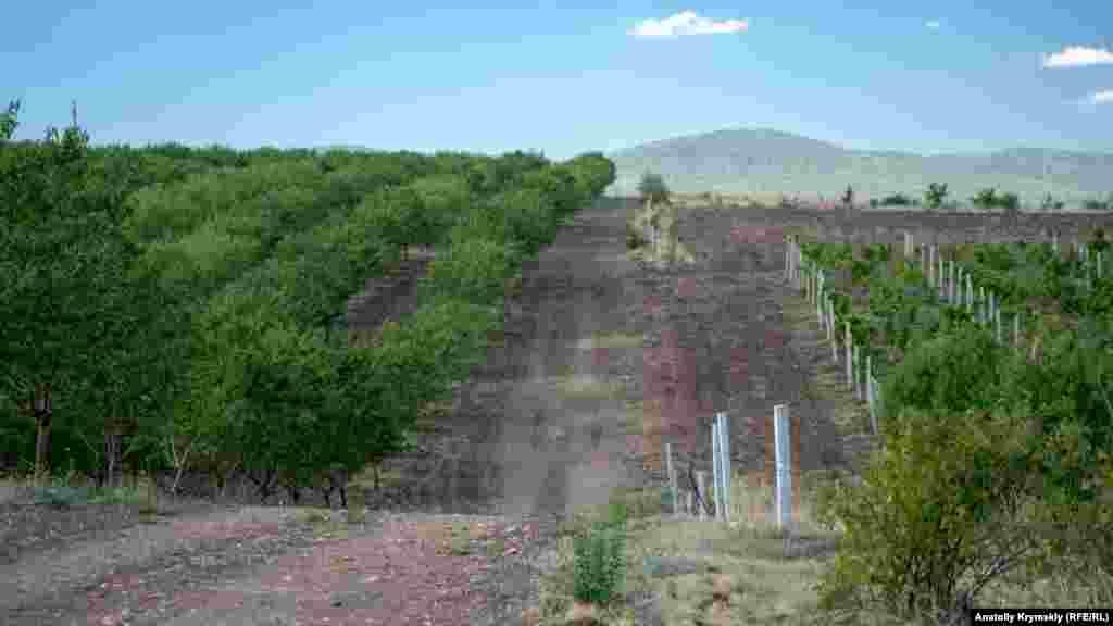 На предгорных холмах за селом простираются частные миндальные сады и виноградники