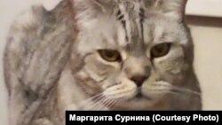 Пропавший кот Мохнур