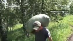 Бывший журналист и строитель с семьей собирает Иван-чай в горах Алтая