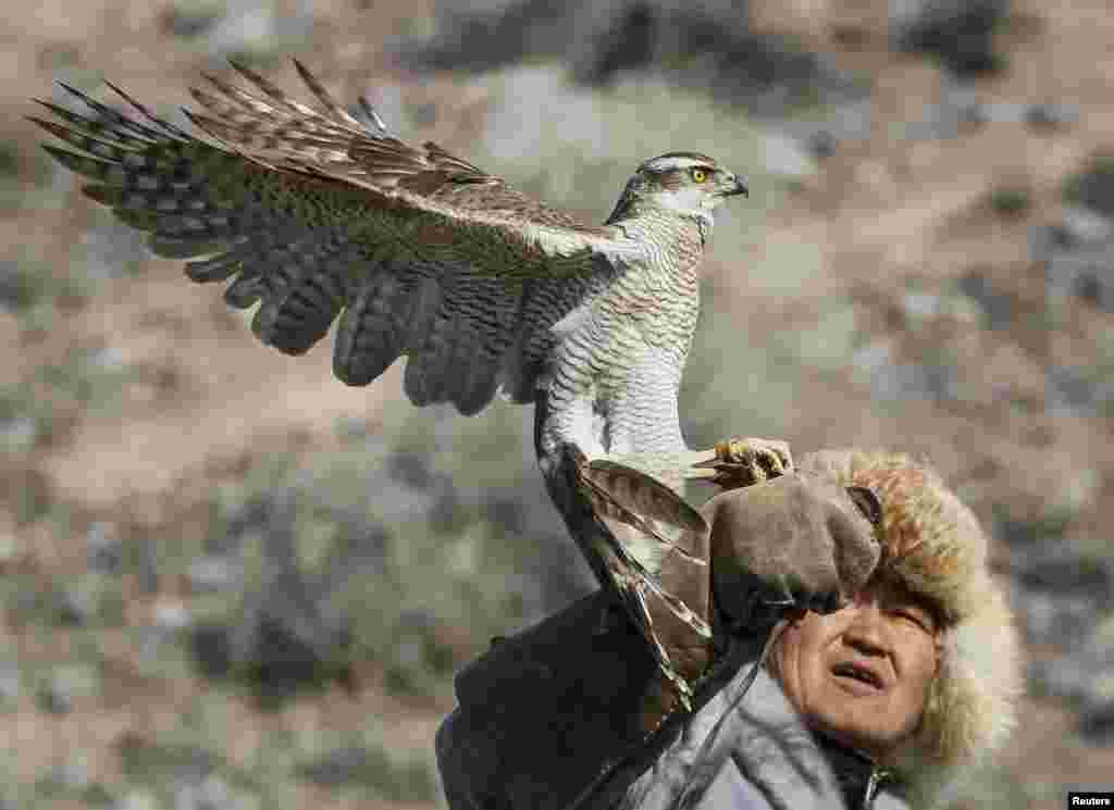 В Центральной Азии используют для охоты беркутов, несколько видов ястребов и соколов. Каждая из этих птиц предназначена для охоты на определенные виды зверей. На волков, лисиц, горных козлов ходят обычно с беркутом. На гусей, дроф — с ястребом. На мелкую дичь — с соколом.