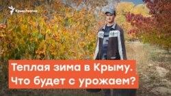 Теплая зима в Крыму. Что будет с урожаем? | Дневное ток-шоу