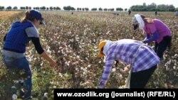 По данным МОТ, подавляющее большинство сборщиков урожая хлопка-сырца в Узбекистане в 2018 году участвовали в этом процессе добровольно.