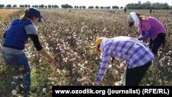 Сборщики хлопка на полях Узбекистана. Самаркандская область, 19 сентября 2015 гда.