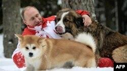 Владимир Путин на прогулке с собаками Баффи и Юмэ - подарками премьер-министров Болгарии и Японии