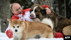 Путин бо сагонаш бозӣ мекунад