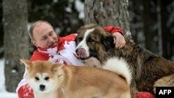 Vladimir Putin Baff və Yume ilə oynayır.