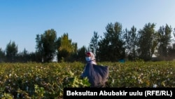 PHOTOGALLERY: Women And the Cotton Campaign In Kyrgyzstan