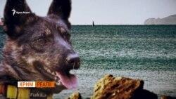 Військово-морський пес України – відео