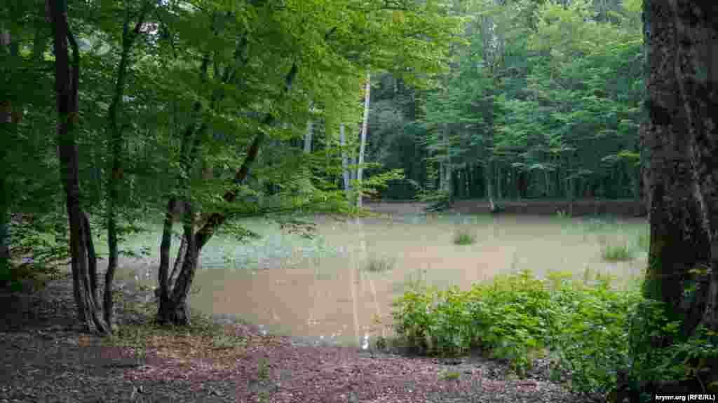 После недавних ливней в лесной ложбине образовалось озерцо, на котором слышалось «песнопение» лягушек