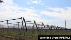 Câmp cultivat în Briceni