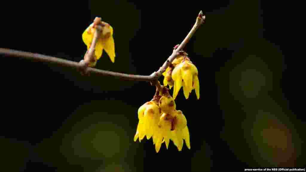 Никитский ботанический сайт подготовил специальную выставку ко Дню святого Валентина