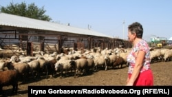 Фермер Ольга Попова со стадом овец
