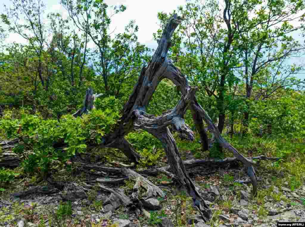 Мертве дерево, наче лісове чудовисько