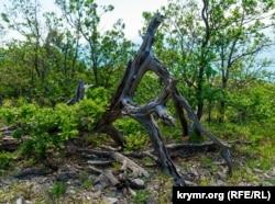 Мертвое дерево, как лесное чудище