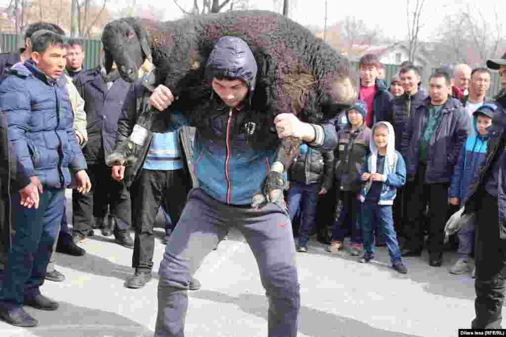 Этот житель Шымкента поднял 55 раз кошкара весом 50 килограммов.
