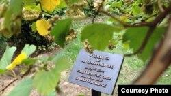 """""""Сад надзеі"""" імя Генадзя Грушавога"""