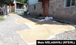 საშემოდგომო სამუშაოების მიუხედავად, წყალთბილის 400-მდე ოჯახი კორონავირუსმა სახლში გამოკეტა. მოხუცები ამბობენ, რომ სოფელში შიშმა დაისადგურა.