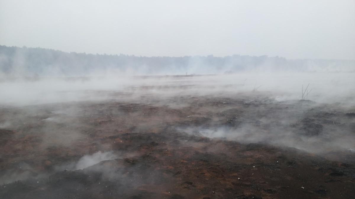 Через образовавшийся дым от поджогов на трассе под Киевом произошло несколько ДТП, есть пострадавшие – «Укравтодор»