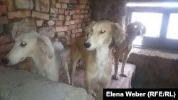 Собаки на ферме, которых содержат обитатели центра реабилитации. Поселок Сарытобе.