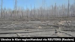 Spaljena šuma 30 kilometara udaljena od nekadašnje nuklearne elektrane 30-ak kilometara, Ukrajina, 10. april 2020.