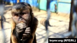 Примат у парку левів «Тайган»