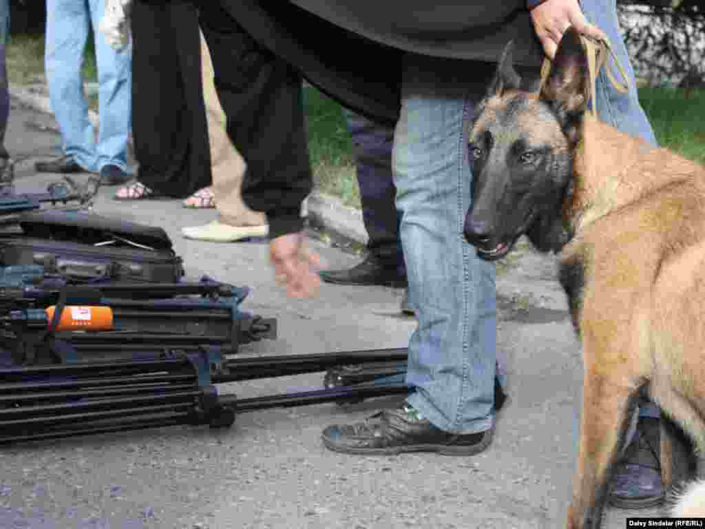 A bomb-sniffing dog checking journalists' equipment ahead of commemoration ceremonies in Osh. Photo by RFE/RL's Daisy Sindelar