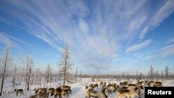 Півострів Ямал (ілюстраційне фото)