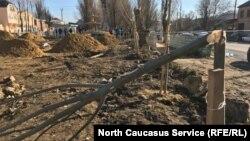 Деревья, посаженные местными жителями, наутро оказались сломанными...