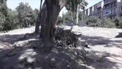 В Ташкенте продолжается незаконная вырубка деревьев