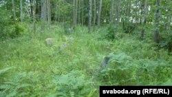 На габрэйскіх могілках у Сьвіслачы